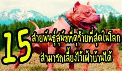 15สายพันธุ์สุนัขที่ดุร้ายที่สุดในโลก สามารถเลี้ยงไว้เฝ้าบ้านได้